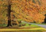 Autumn In Hulne Park
