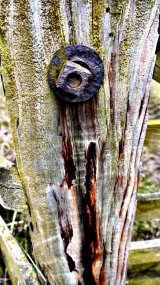 Bolted To Wood