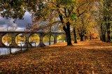 C Autumn Gold - Alan McCormick