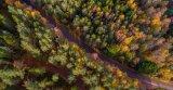 Com Autumn colours - Graeme Pattison
