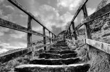 Com Back Steps : David Burn