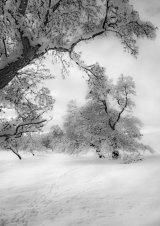 Com Footprints in the Snow - John Twizell
