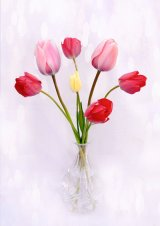 Com Tulip display - Lynn Kerr