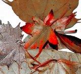 HC Autumn Leaves - Denise Metcalf