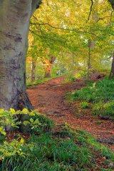 HC Path through the woods - Penny Horseman