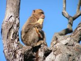 Highly Commended Monkey up a tree : Peter Cordingley