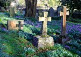 Mitford Graves