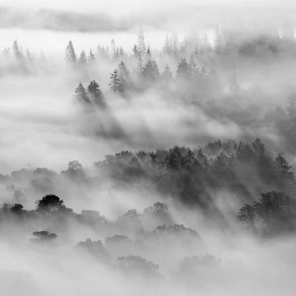 Coilhallan Woods
