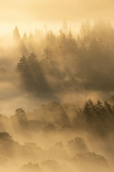 Golden Woods, Callander