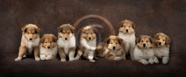 19 POSING PUPPIES by Katrina Wilson