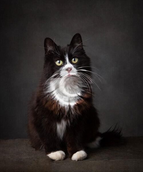 21 CURIOUS CAT by Katrina Wilson