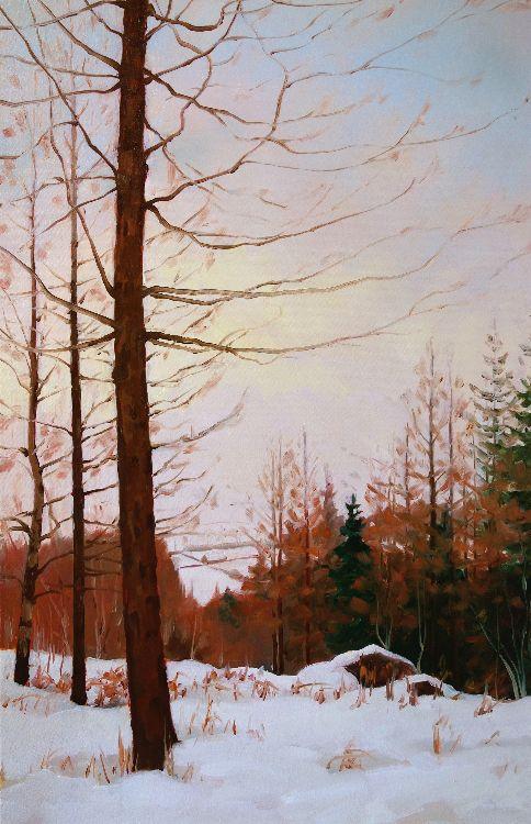 Glen Nevis Larch, 40x60cm, oil on canvas, £650