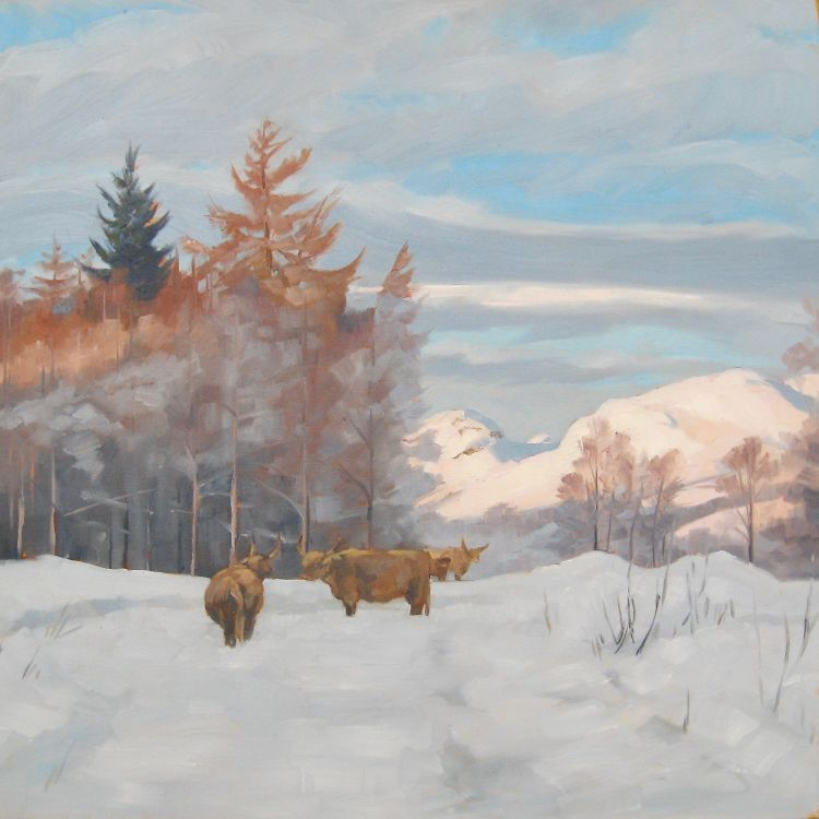 Highland Cows by the Campsies, 50x50cm, oil on canvas (currently unframed £600, framed £650)