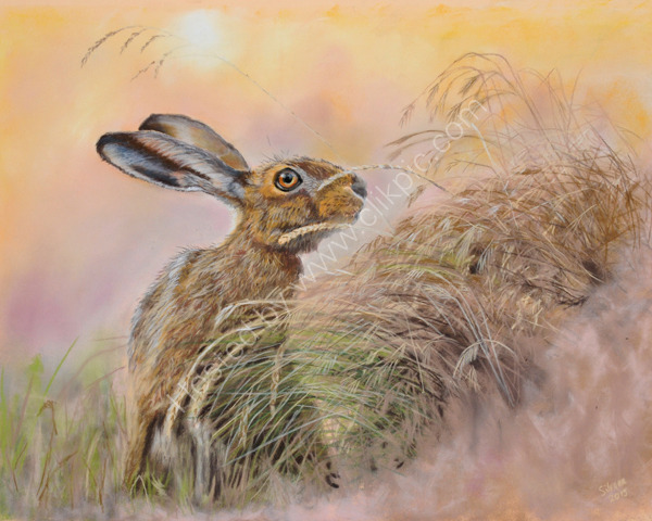 """On Alert"" pastel painting. Original photograph by Jon Evans an amazing photographer. Kindly used with his permission"