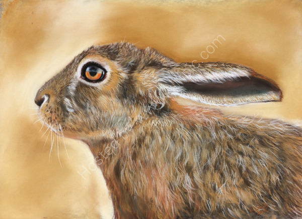 Hare Today from a photograph by Jon Evans with his kind permission