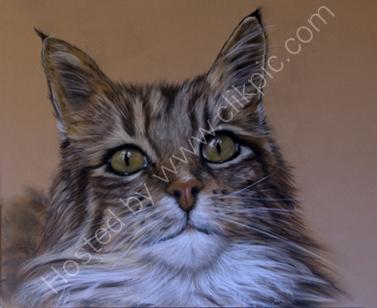 cat pastel