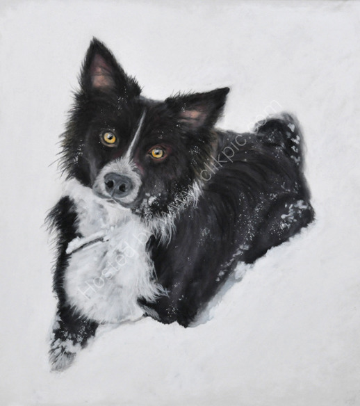 "Border Collie ""Millie"" in the snow!"