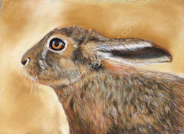 Hare today
