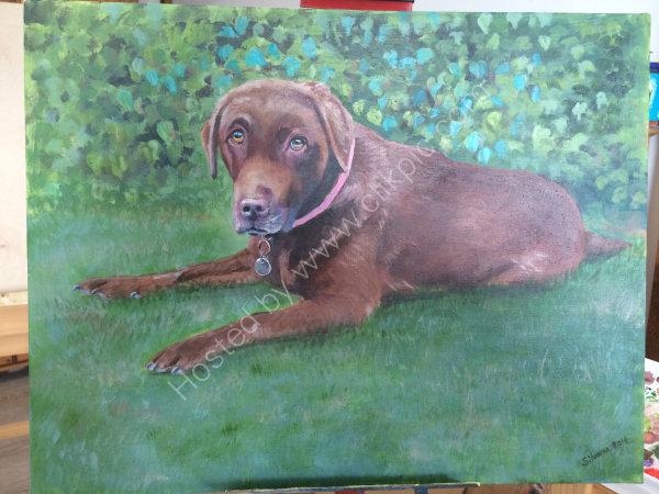 Brown Labrador in Acrylic