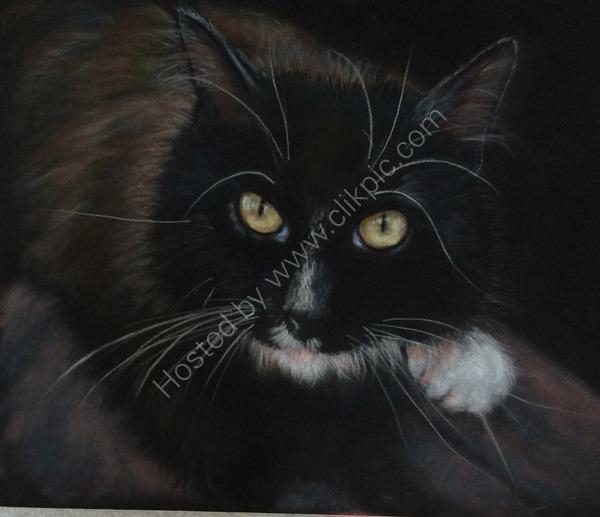 Black cat pastel painting on velour