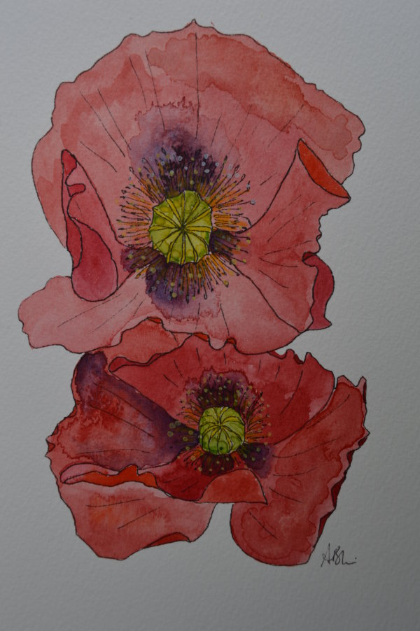 two poppy flowers
