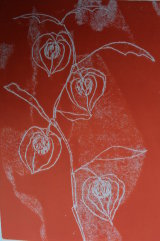 physalis in red