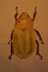gold beetle