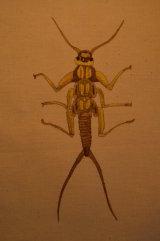long gold beetle