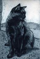 Black Cat Scillys