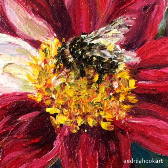 A buff tailed bumble bee on a red dahlia