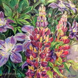 Lupins & Clematis: Sold