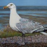 Strike a Pose - Catwalking Seagull