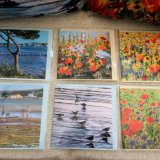 Dorset Wildflower & Coastal Cards