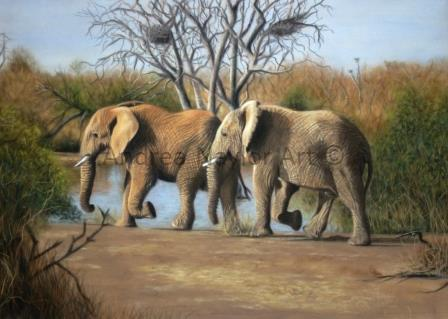 Elephants of Africa - SOLD