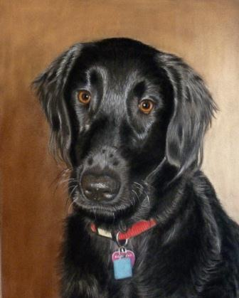 'Lilly' - Flatcoat Retriever