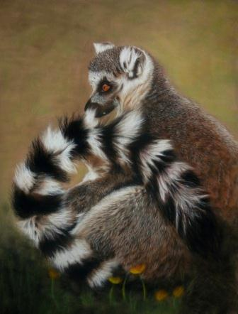 Long Tailed Lemur - SOLD