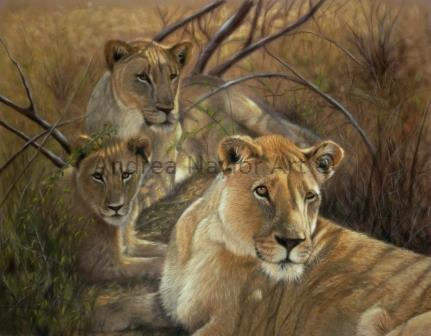 Pride of lions - SOLD