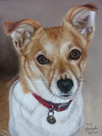 'Tia' - Terrier