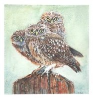 Little Owls by Heather Read
