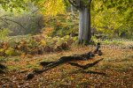 Ashridge Autumn