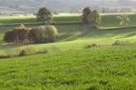 Backlit Farmland