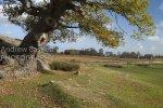 Bradgate Park