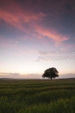 Downland Tree