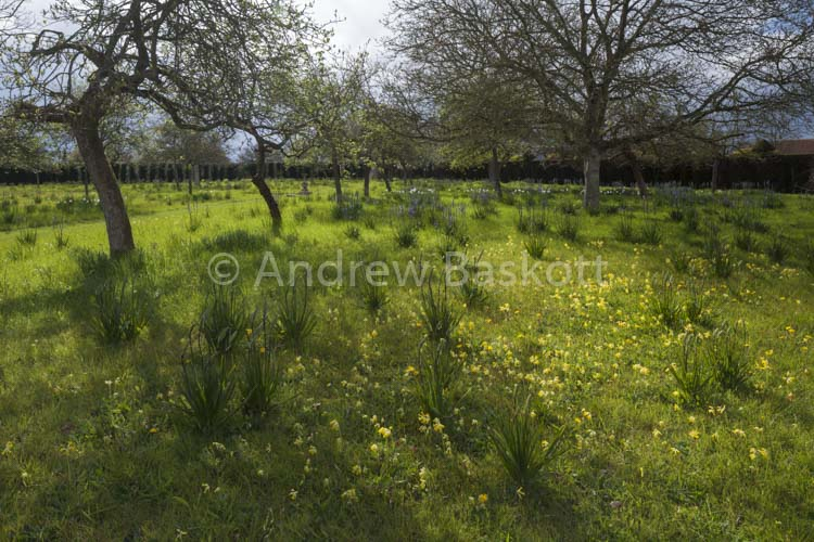 Orchard Meadow
