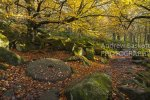 Yarncliff Wood