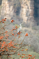 Heron and blossoms