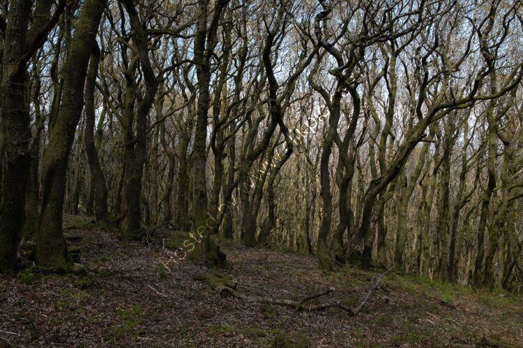 The Gurt Wurm of Shervage Wood