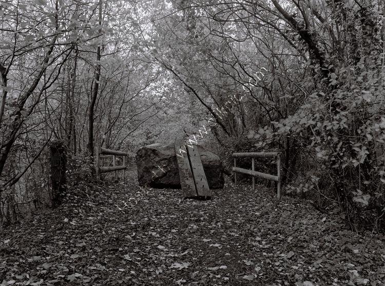 Trackbed near Tidenham Quarry, Gloucestershire