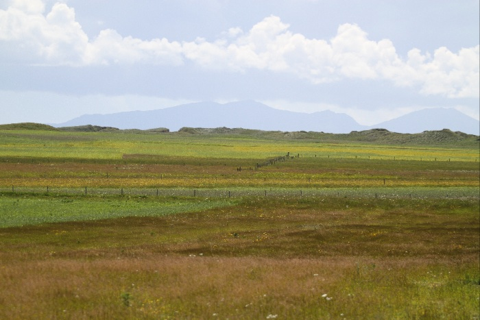 Cultivated Machair on South Uist, high summer