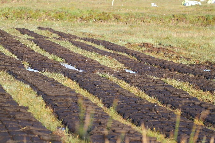 Peat cuttings drying before stacking